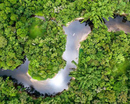 Ligados na biodiversidade da Amazônia