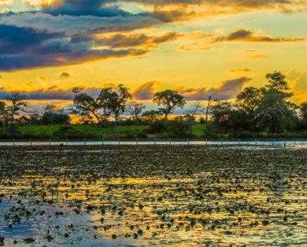 No Pantanal, até o fogo pode ser natural